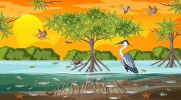 Mangrove forest landscape scene at sunset time with many different animals vector