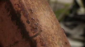 fourmis à la recherche de nourriture video