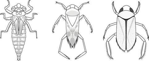 Conjunto de diferentes tipos de insectos y escarabajos. vector