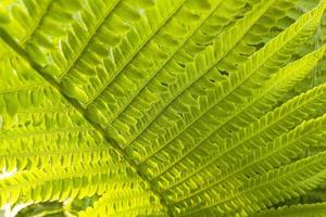 Beautiful fern leaf close-up photo