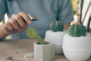 Woman caring for cacti on wooden table photo