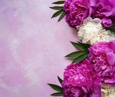 flores de peonía sobre un fondo de hormigón rosa foto