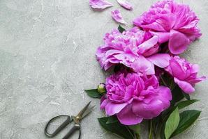 Flores de peonía sobre un fondo de hormigón gris foto