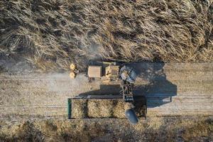 Vista aérea superior de los cortadores de caña de azúcar están trabajando al aire libre foto