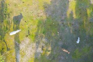 Aerial top view of cows on green meadow photo
