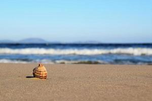 A Shell in the Sand photo