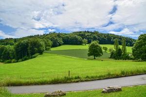 Forest in Switzerland photo
