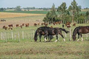 Horses in the farm photo