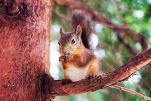 Squirrel on tree branch photo
