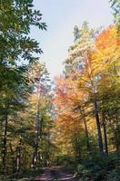 Hiking trail road through an autumnal forest in the sunshine photo