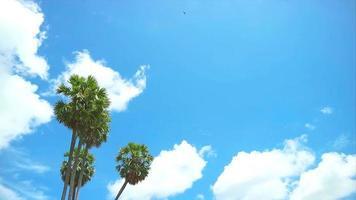 le palmier se penchait vers le vent, avec les nuages vacillant en été video