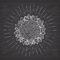 Sunflower sketch, Vintage label, Hand drawn grunge textured badge, retro logo template, typography design vector illustration