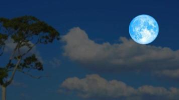 castor bleu lune se lève en arrière nuage sombre sur palmier silhouette sur le laps de temps du ciel nocturne video