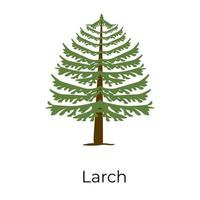 Larch Tree Timber vector