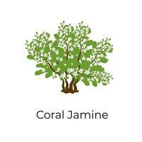 Coral Jasmine Shrub vector