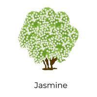 olivo jazmín vector