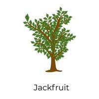 Jack fruit Tree vector