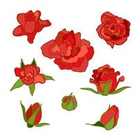 Vector colorful set with flowers. Red rose. Clip-art elements for postcard, banner, t-shirt print, invitation, greeting card, poster