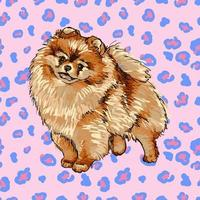 Colorful vector Illustration of the dog breed Pomeranian isolated on white background