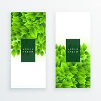 Vector banner set with green tropical leaves on white background Exotic botanical design for cosmetics spas perfumes beauty salons travel agencies flower shops Best as a wedding invitation card