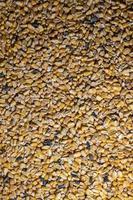 textura de maíz para la alimentación de animales de granja foto