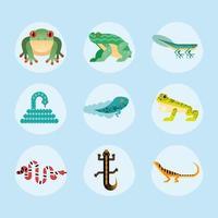 cute nine amphibians vector