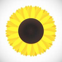 Sunflower flat style design gradient version icon sign vector illustration isolated on white background Symbol of fall harvest