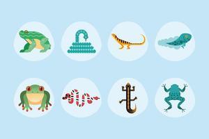 lindos ocho anfibios vector