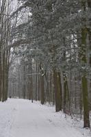 Winter forest landscape photo