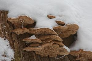 Close up of a rotten stump photo