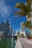 Miami Downtown with Palms, Skyscrapers and Blue Sky photo