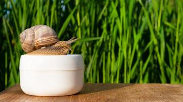 Snail on a jar of cream with mucin in the summer garden copy space, beauty skin care photo