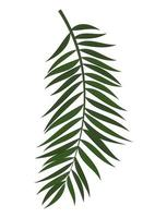 Abstract Realistic Green Palm Leaf. Design Element. Vector illustration EPS10
