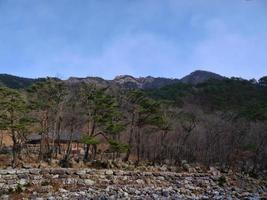 bosque de montaña en corea del sur. parque nacional seoraksan foto