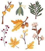 Set of autumn leaves branches and berries. Physalis, cotton, acorns, maple leaf, chestnut, fir branch, berries. Nature floral collection. Perfect for seasonal holidays. Vector cartoon illustration