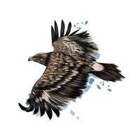 Flying steppe eagle from a splash of watercolor, colored drawing, realistic. Vector illustration of paints