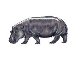 Hippopotamus from a splash of watercolor, colored drawing, realistic. Vector illustration of paints
