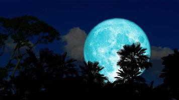 super castor bleu lune se lève en arrière nuage sombre et palmier silhouette sur le laps de temps du ciel nocturne video
