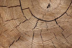 textura de madera de un tronco de árbol con hermosos tonos dorados. foto