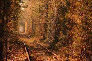 Tunnel of Love in Ukraine photo