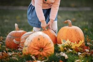 Cropped photo of a little girl trying to lift a pumpkin