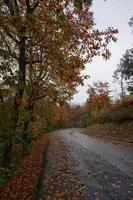 Road with red trees in the mountain photo