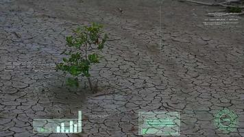 sobrevivência da erva em terra seca e varredura de análise de IA e informações video