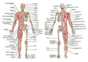 diseño gráfico de información humana vector