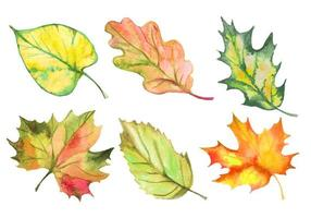 Set of watercolor autumn leaves. Vector
