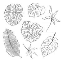 Collection of summer plants line art vector