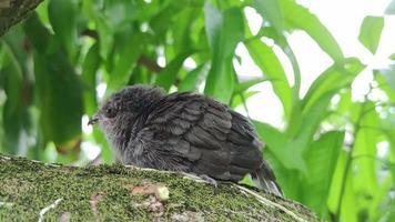 o pássaro senta-se em um belo galho no fundo da natureza video