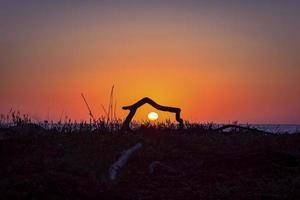 Sunset through driftwood photo