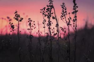 Flower silhouettes at sunset photo