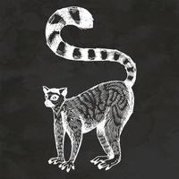 Ring Tailed Lemur Hand Drawn Retro Style Sketch Vintage Illustration Vector
